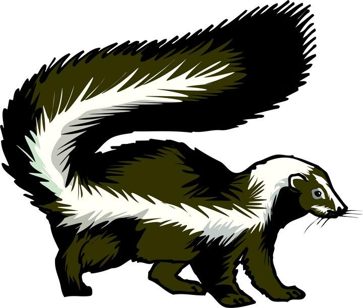 Best Skunk Clipart #13867.