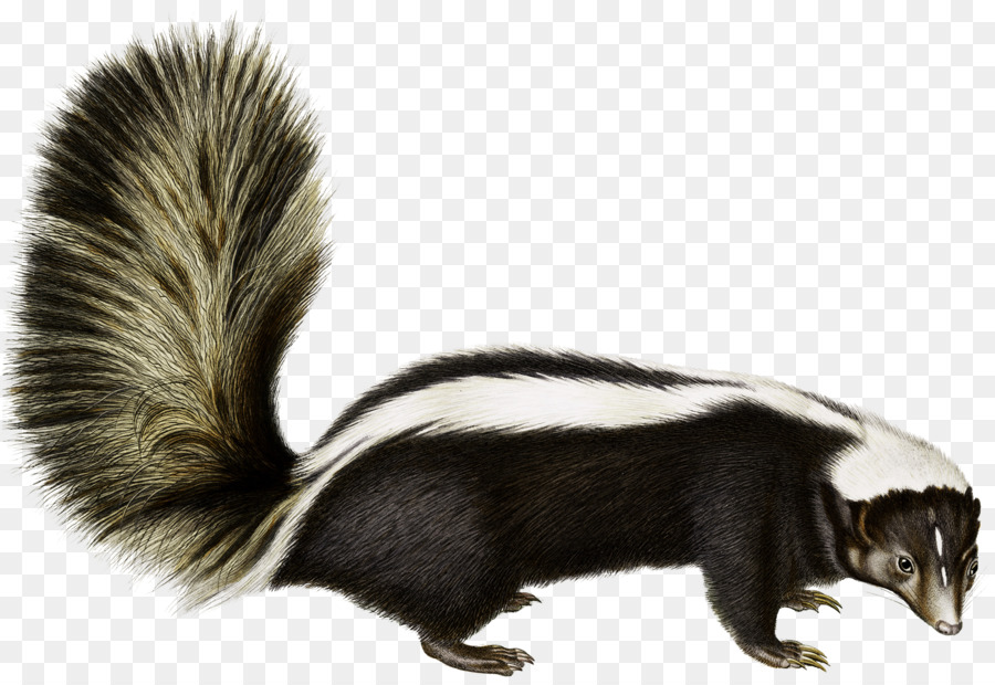 Rodent Animal Fauna Fu #56143.