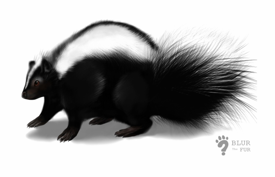 Skunk Transparent Image.