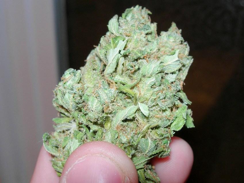 Lemon Skunk Marijuana Strain Review.