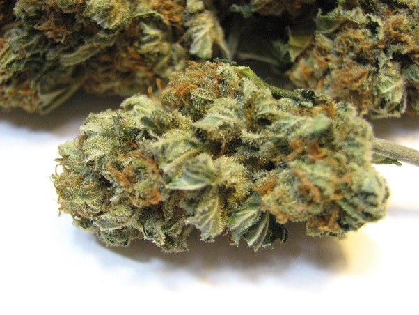 What is skunk marijuana? Why do people make a big deal out of it.
