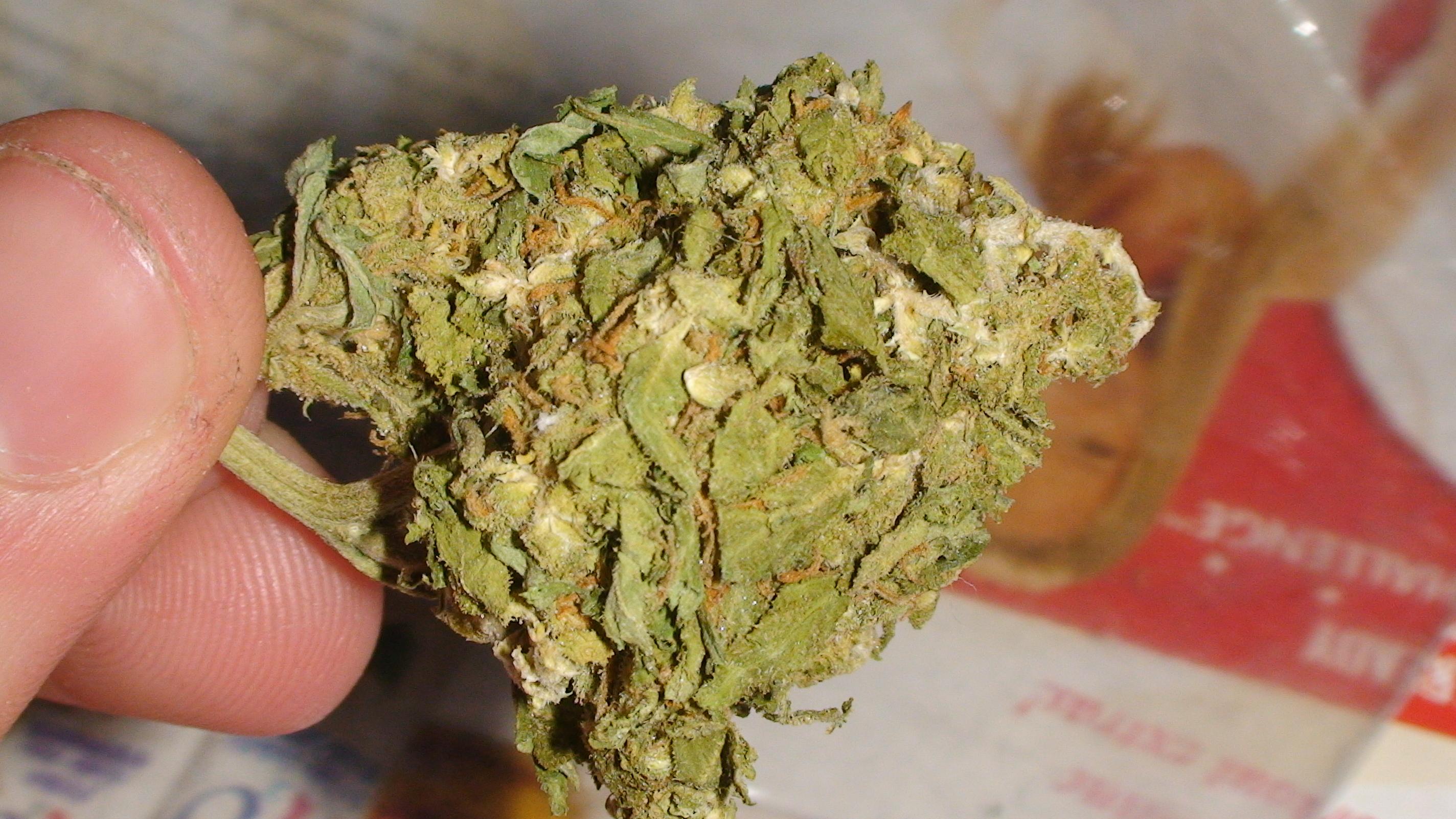 Skunk Weed.