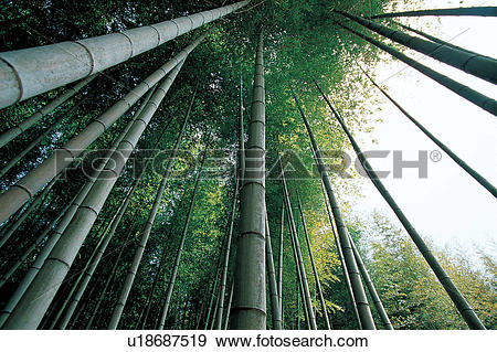 Stock Photograph of trees, sky, plants, plant, forest, background.