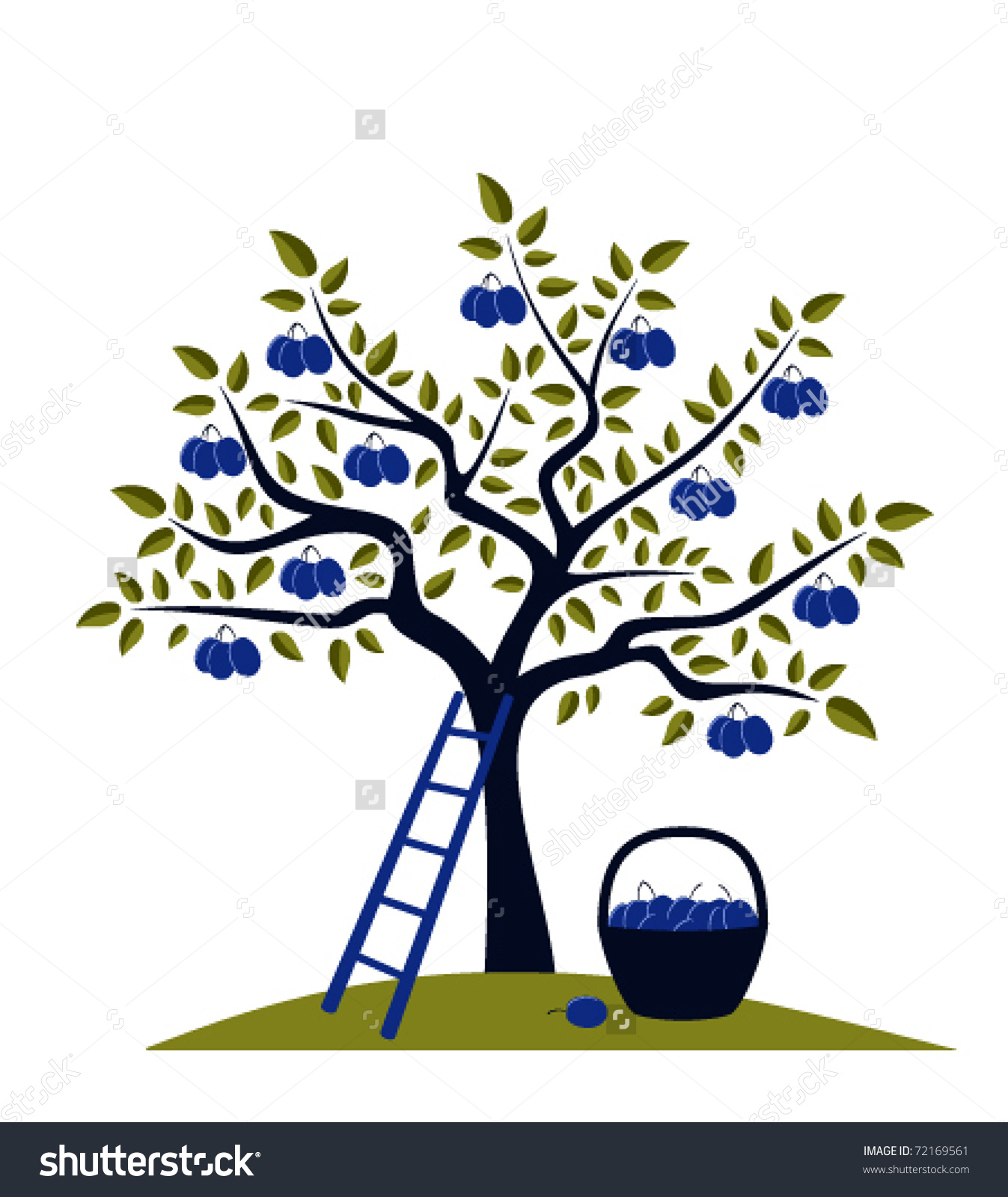 Vector Plum Tree, Ladder And Basket Of Plums.