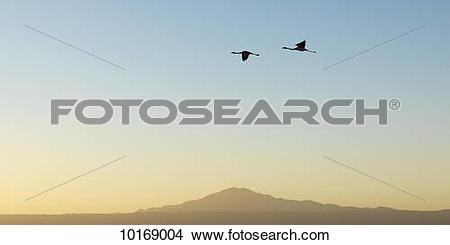Stock Photo of Silhouette of two birds flying across a blue sky at.
