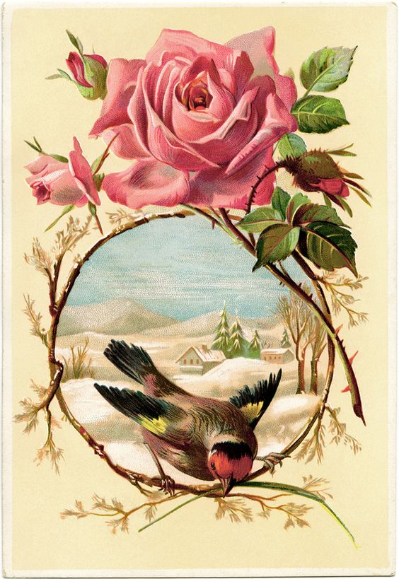 Victorian rose bird card, vintage rose clip art, vintage bird.