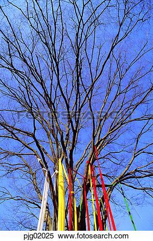 Stock Image of Seonghwangdang, Seonangdang, Seonangsin, tree, sky.