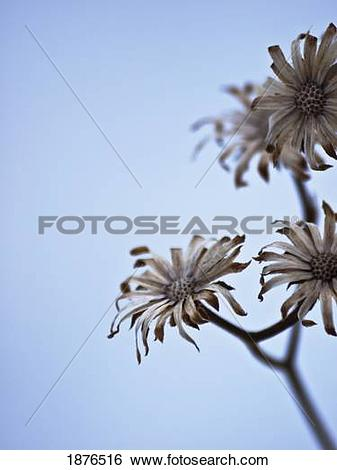 Stock Images of Flowers On A Stem Against A Blue Sky 1876516.