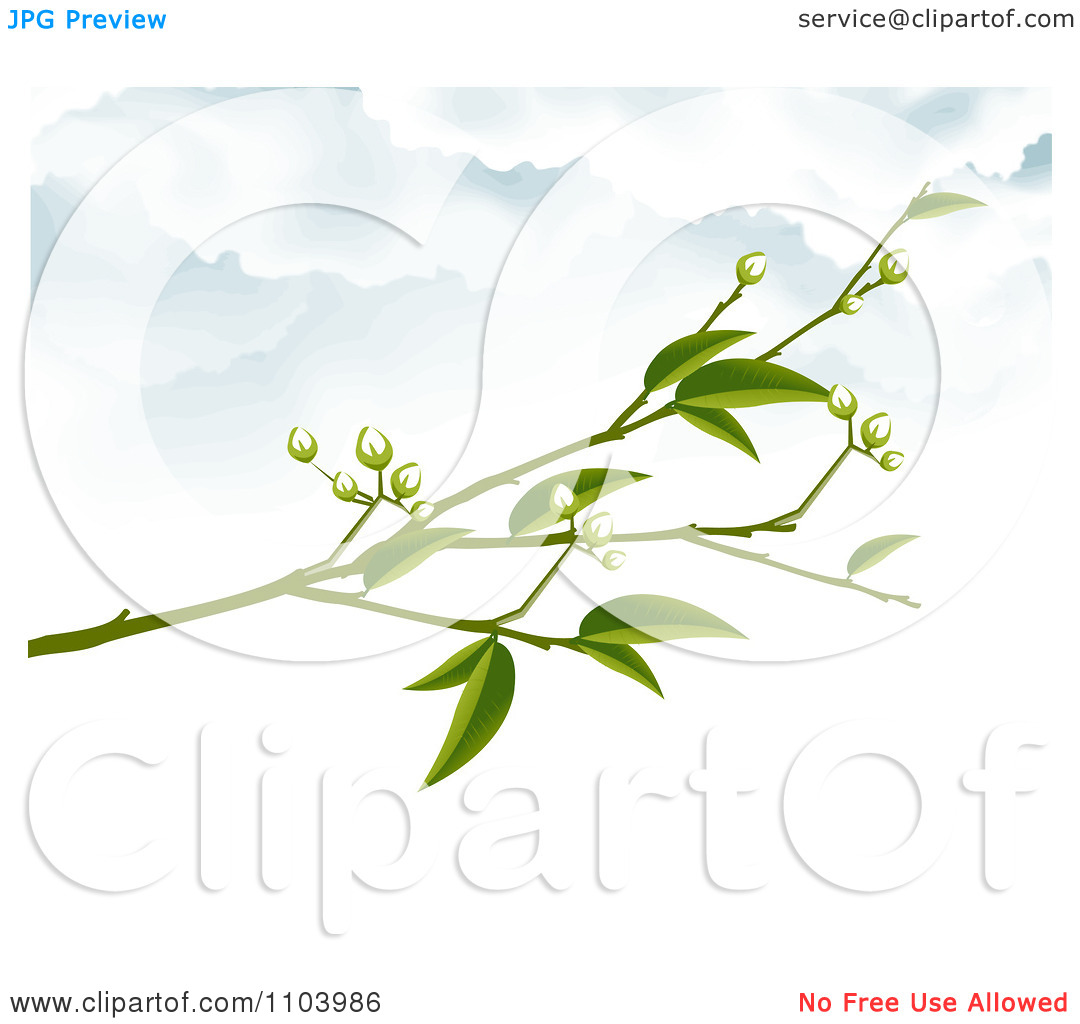 Clipart Blossom Branch Against A Cloudy Sky 1.