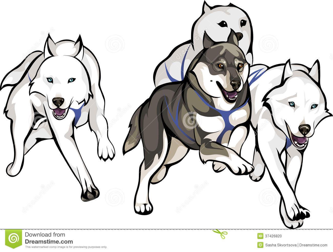 Husky Stock Illustrations.