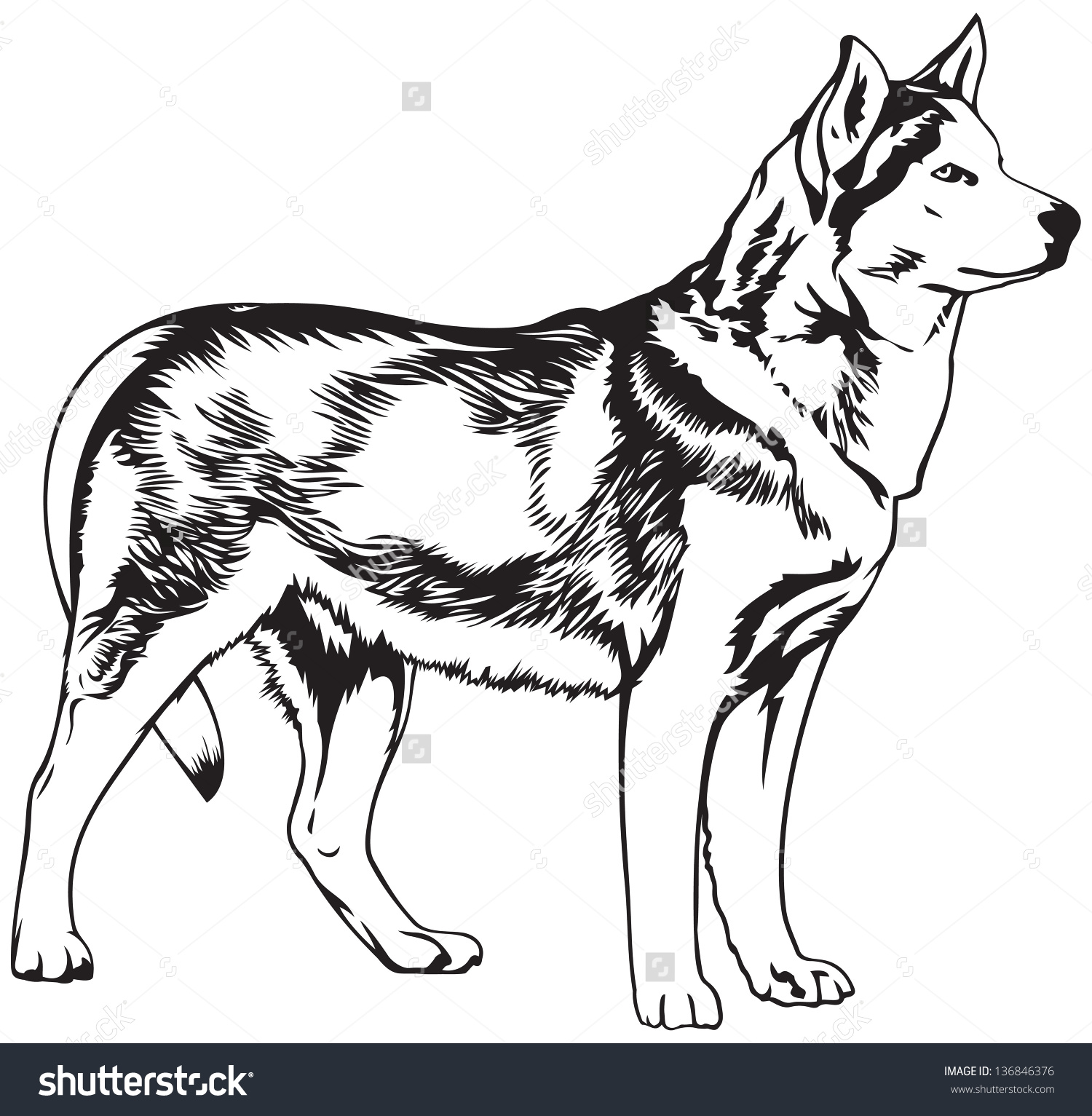 Husky Dog Breed Vector Illustration Dogs Stock Vector 136846376.