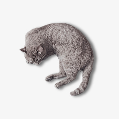 Sleeping Cat Png, Vector, PSD, And Clipa #441152.
