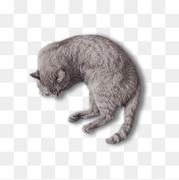 Sleeping Cat Png (94+ Images In Collecti #441163.