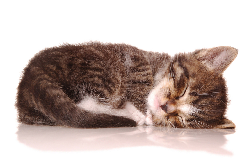 Sleeping Cat Png (104+ images in Collection) Page 1.