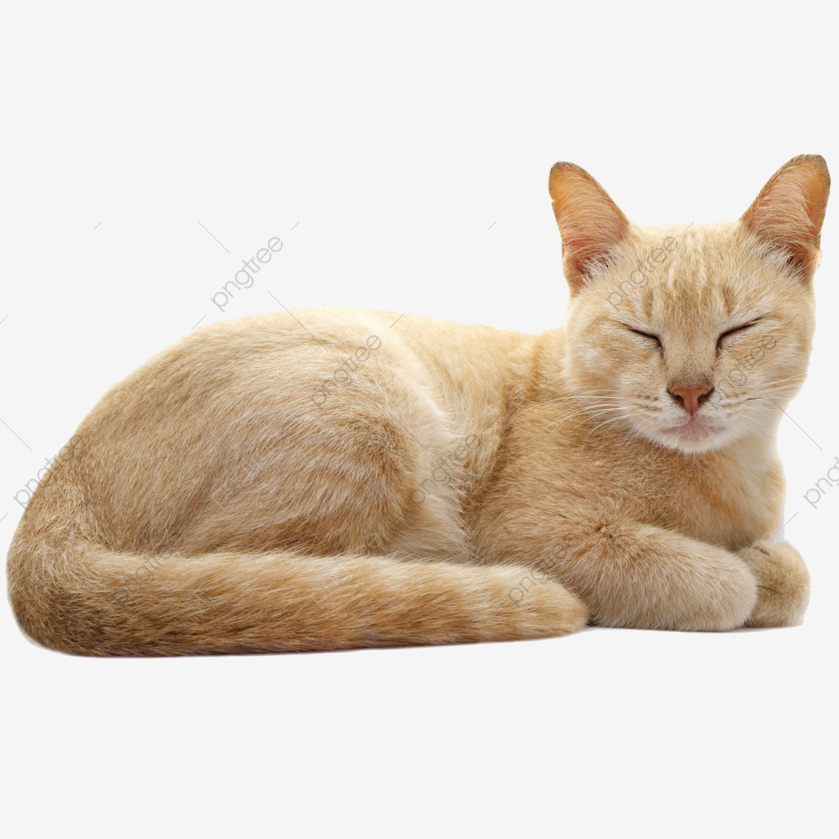 Cat Sleeping, Cat Clipart, Animal Clipart, Adorable PNG.