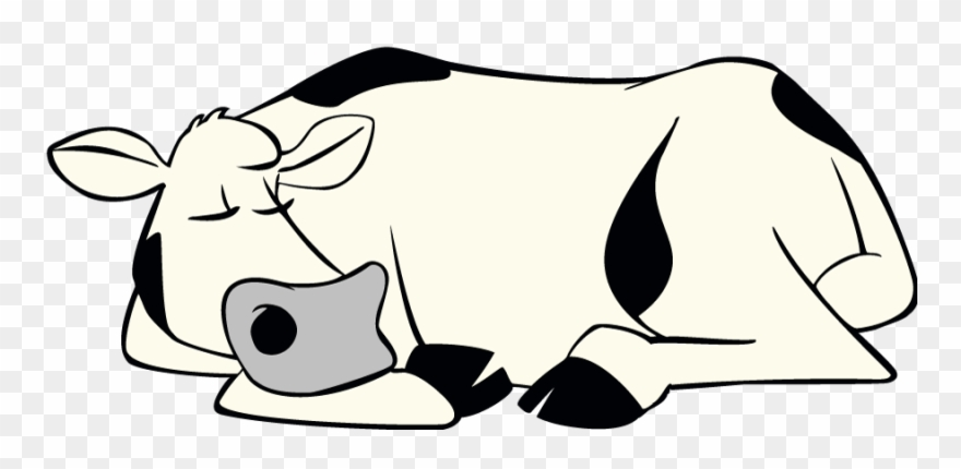 Sleeping Cow.