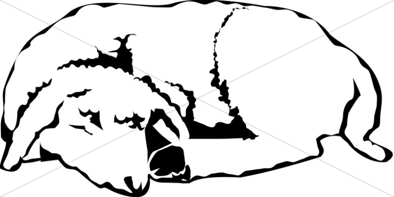 The Sleeping Lamb in Black and White.