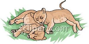 Sleeping Lion Cubs.