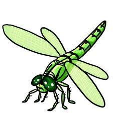 Dragonfly Clip Art photo.
