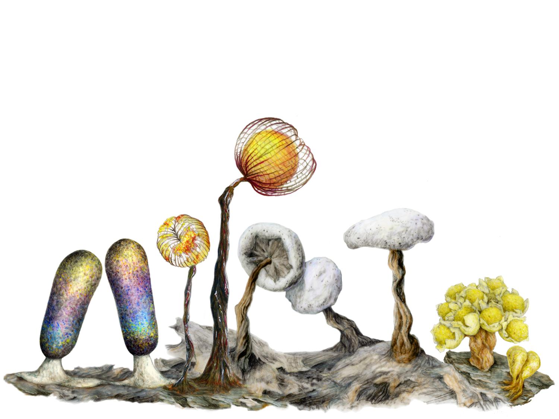 The Slime Mold Revelation — Sporangela.com.
