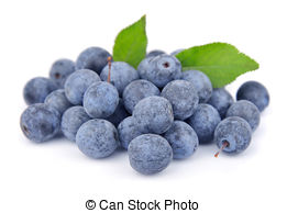 Sloes Stock Photo Images. 658 Sloes royalty free pictures and.