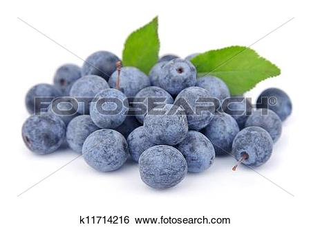 Stock Images of Sloe k11714216.