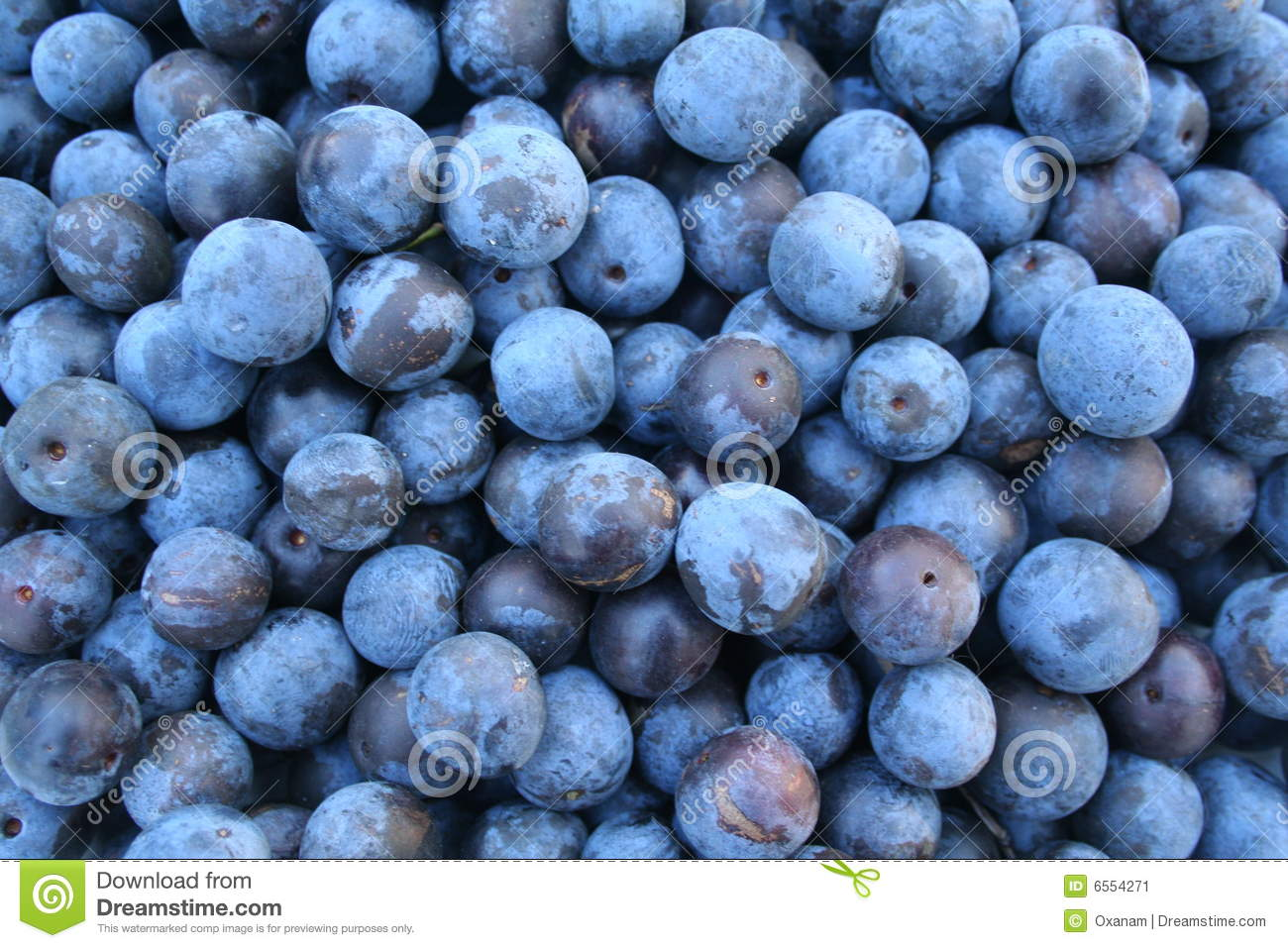 Autumn Sloes. Background. Blackthorn Stock Image.