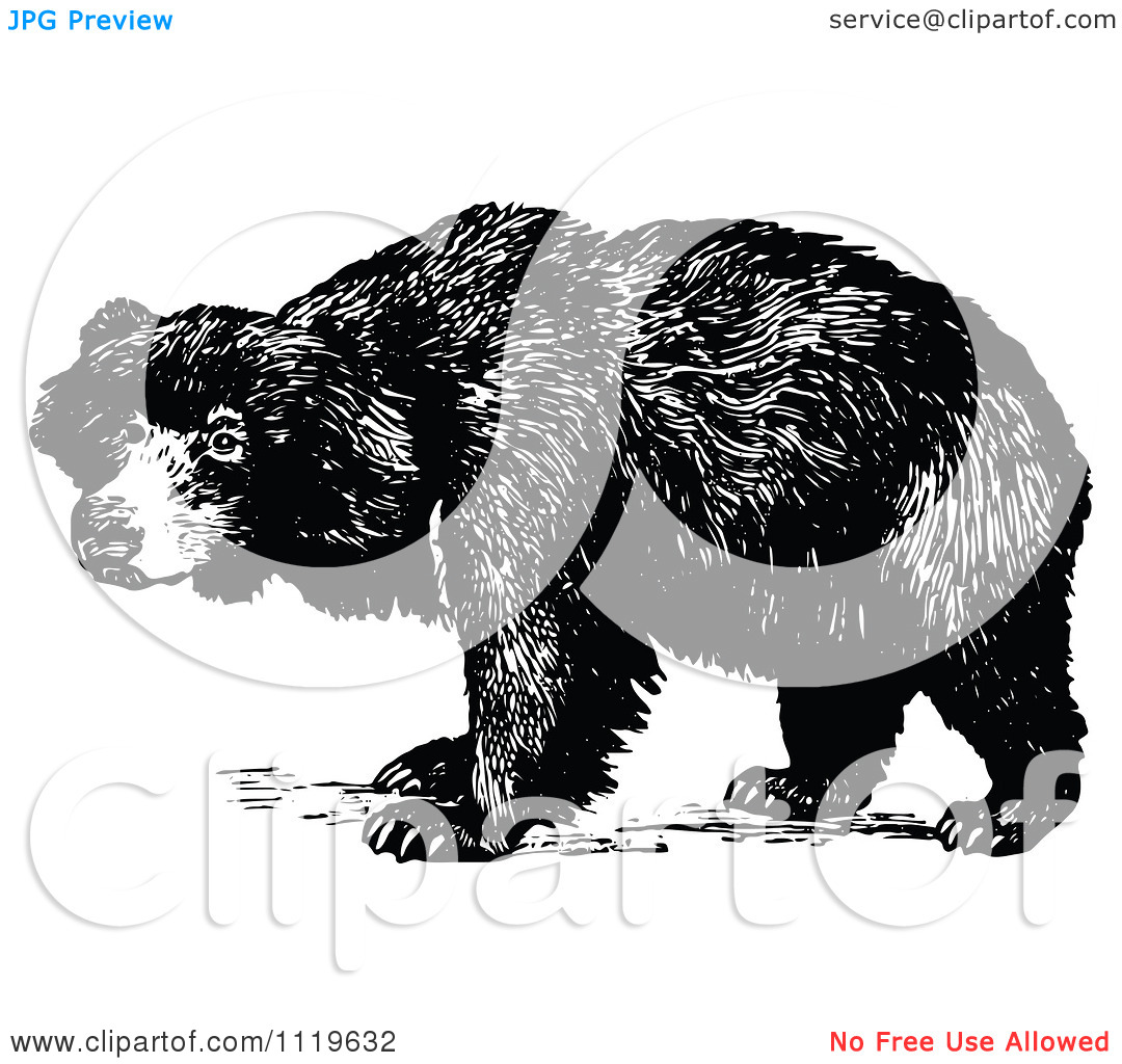 Clipart Of A Retro Vintage Black And White Sloth Bear.
