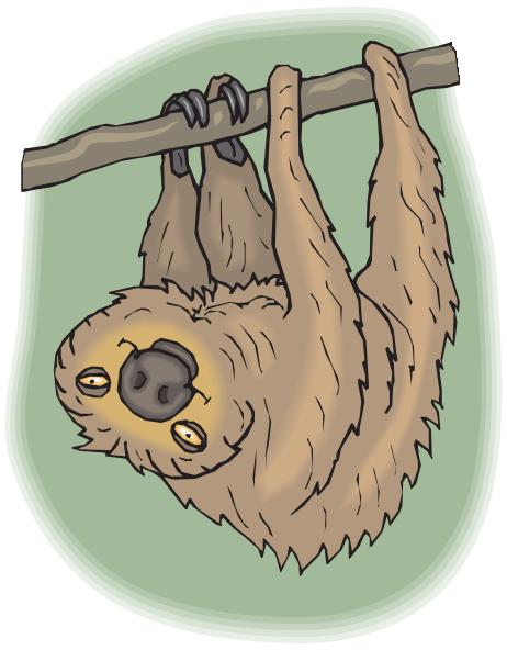 Happy Hanging Sloth Clip Art at Clker.com.