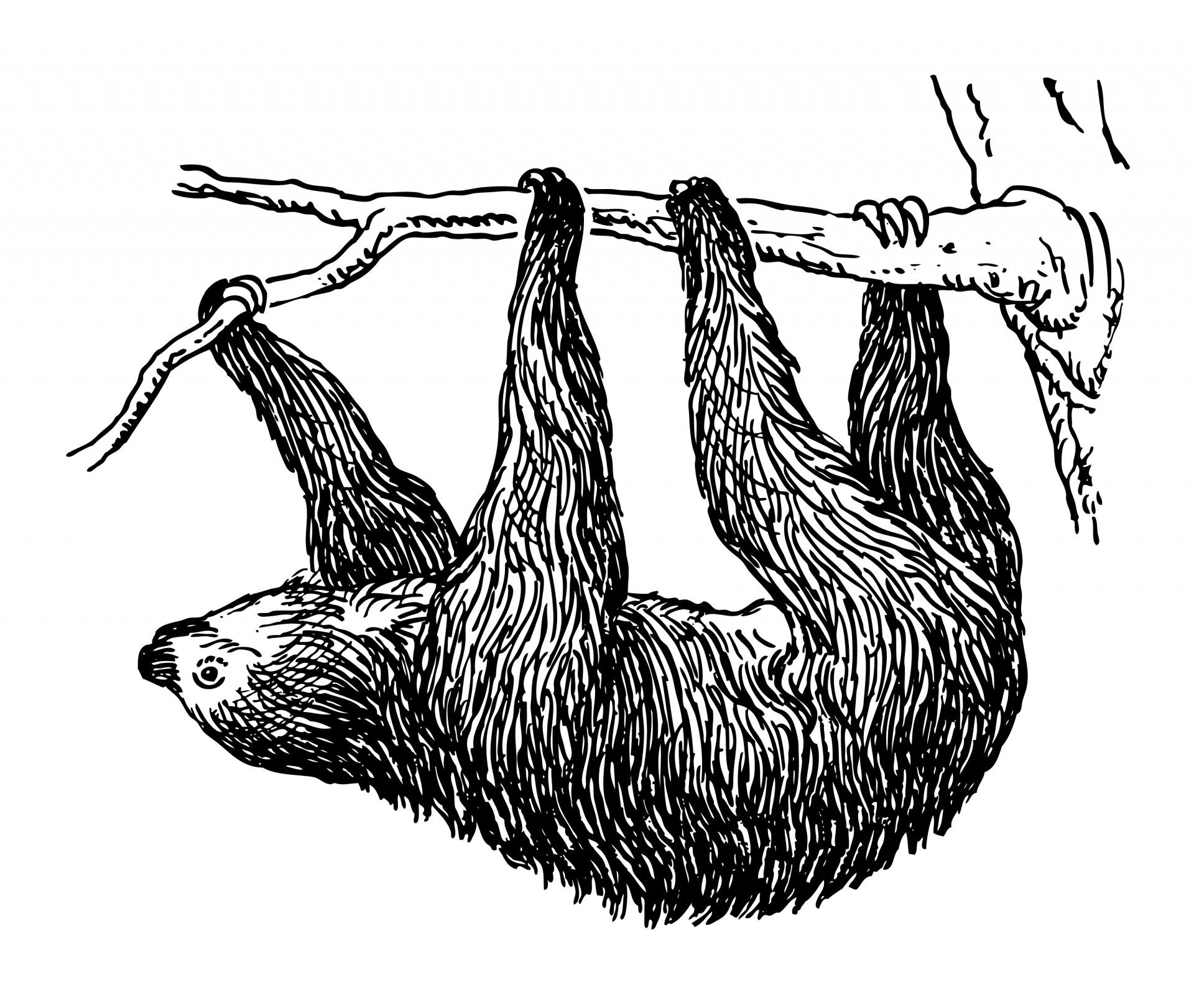 Sloth Clipart Illustration Free Stock Photo.