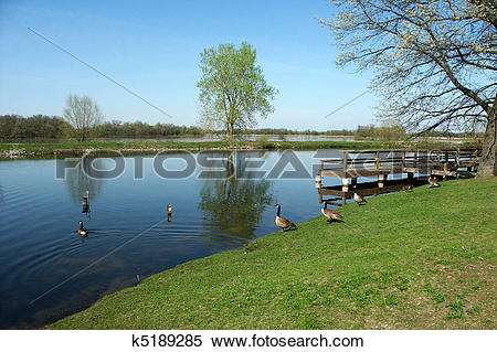 Stock Image of Willow Slough.