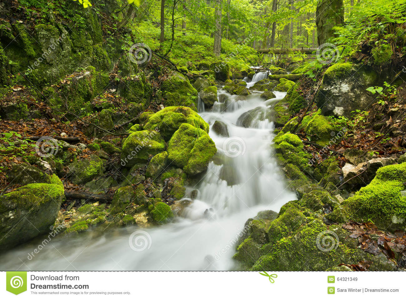 Waterfall In A Lush Gorge In Slovenský Raj, Slovakia Stock Photo.