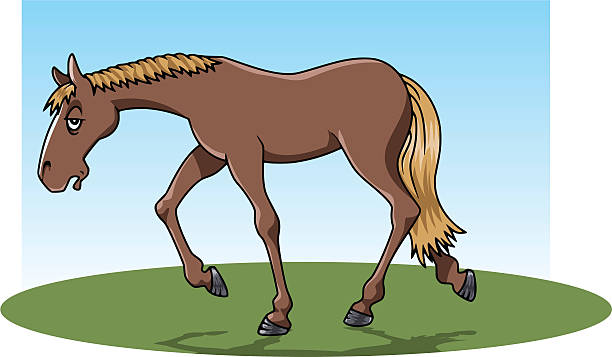 Horse Laziness Tired Slow Clip Art, Vector Images & Illustrations.