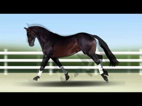 Calm Study Music with Slow Horse Clip Art.