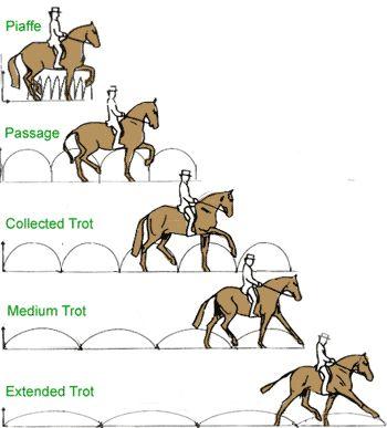 1000+ ideas about Dressage Horses on Pinterest.