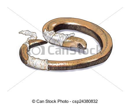 Drawings of Slow worm lizard digital illustration csp24380832.