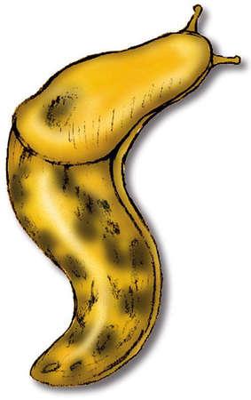 Banana slug clipart.