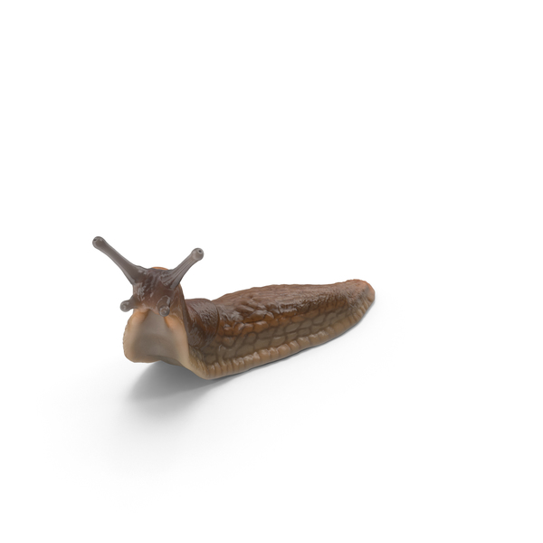 Slug PNG Images & PSDs for Download.
