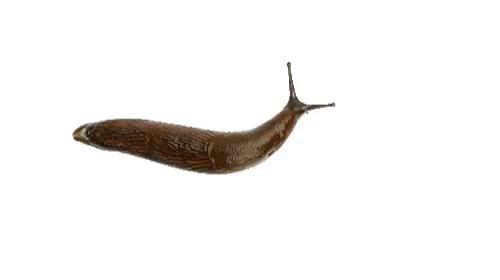 Slug PNG Images.