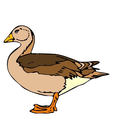 Small Animal Clipart.