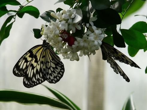 Butterfly public domain free stock photos download (67,654 Free.
