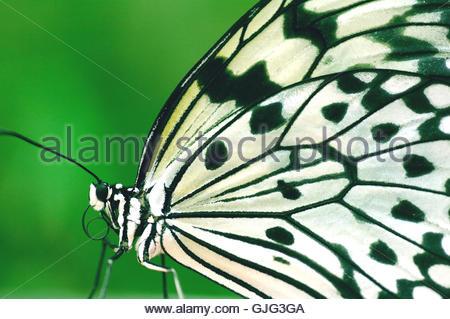 Butterflies Stock Photos & Butterflies Stock Images.