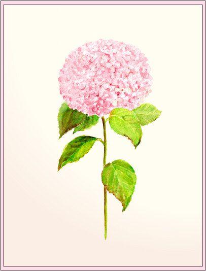 1000+ ideas about Pink Hydrangea on Pinterest.