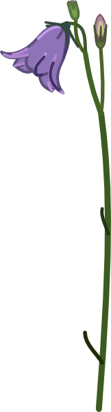 Bellflower Clip Art at Clker.com.