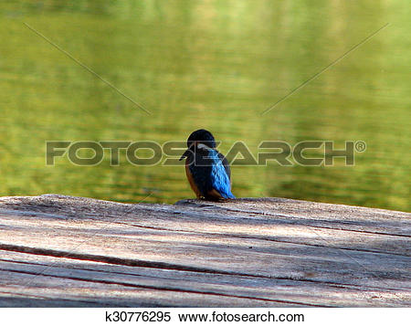 Stock Illustration of Beautiful blue Kingfisher bird k30776295.