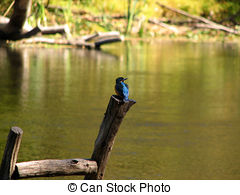 Kingfisher Illustrations and Stock Art. 229 Kingfisher.