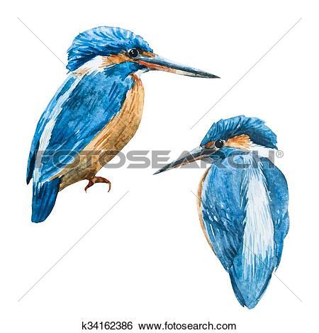 Clip Art of Watercolor vector blue kingfisher bird k34162386.