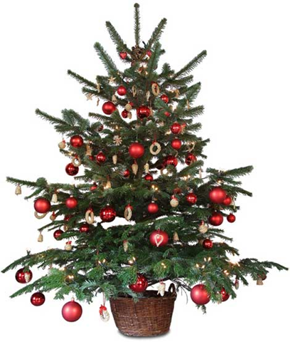 Small christmas tree png » PNG Image.