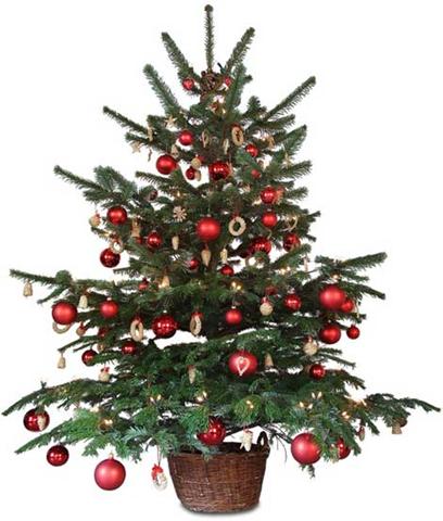 Small christmas tree png » PNG Image.