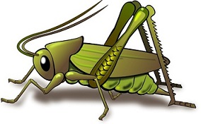 Free Cicada Insect Clipart.